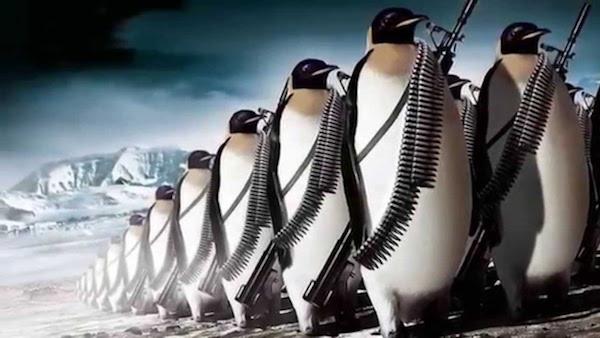 algoritmo penguin